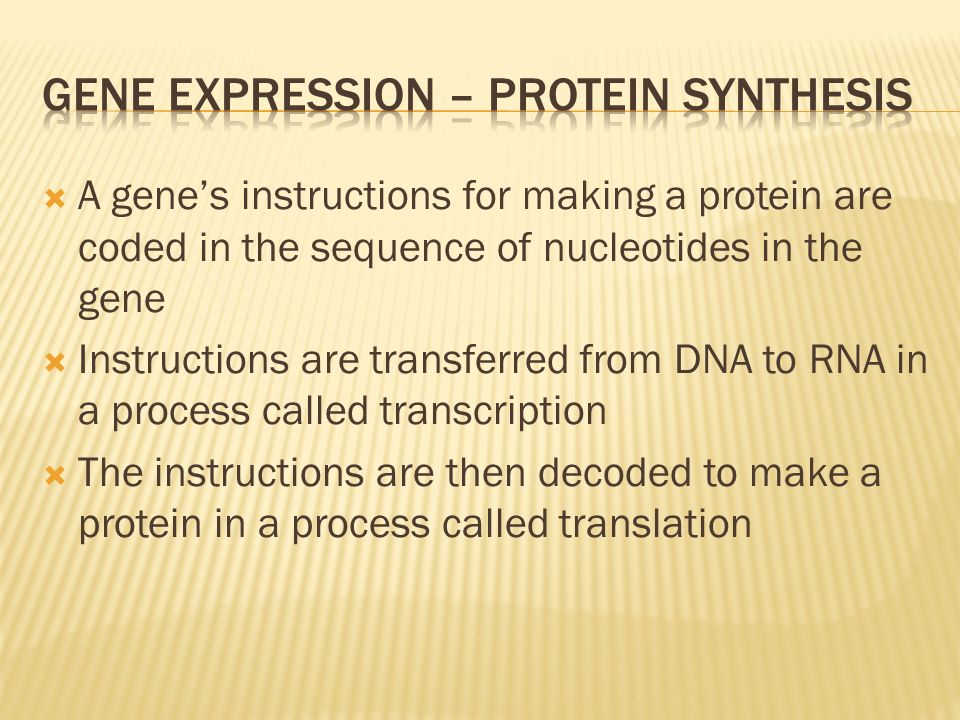 Gene expression – protein synthesis