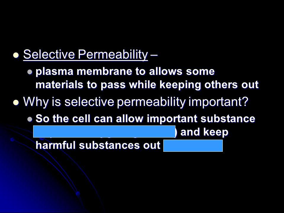 Selective Permeability –