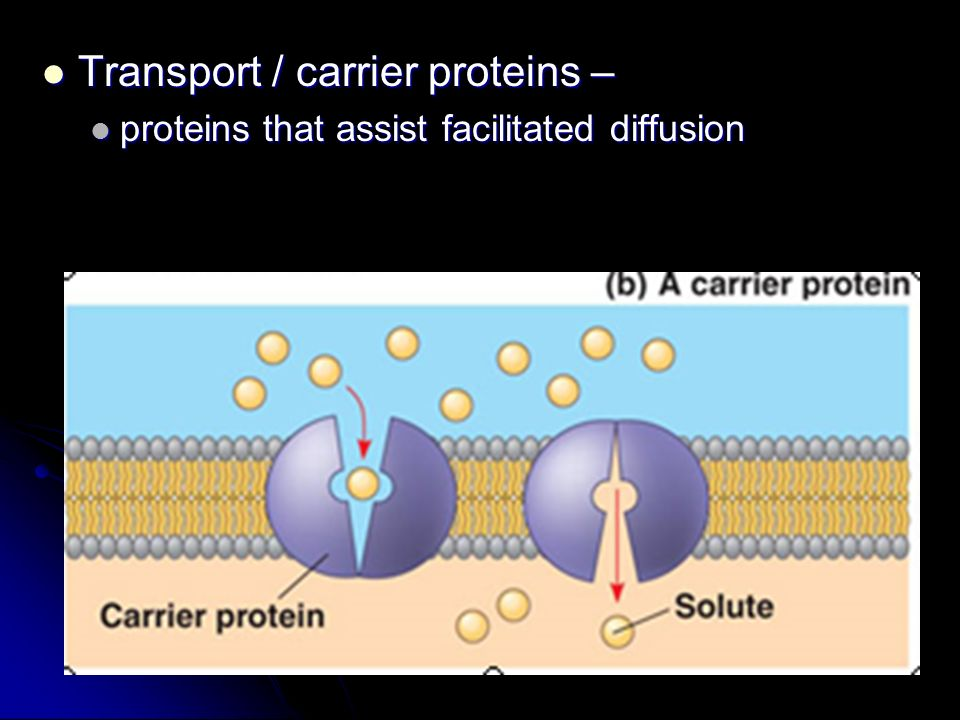 Transport / carrier proteins –