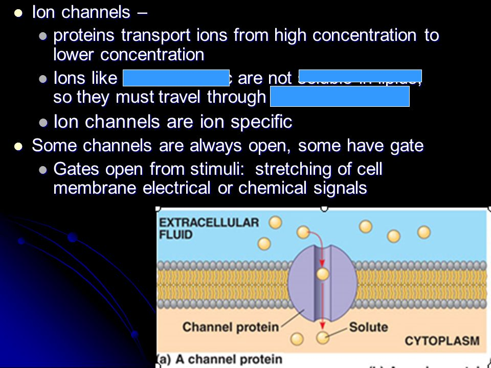 Ion channels are ion specific