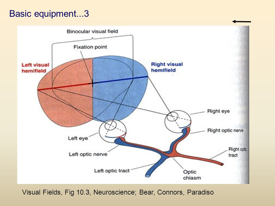 Basic equipment...3 Visual Fields, Fig 10.3, Neuroscience; Bear, Connors, Paradiso