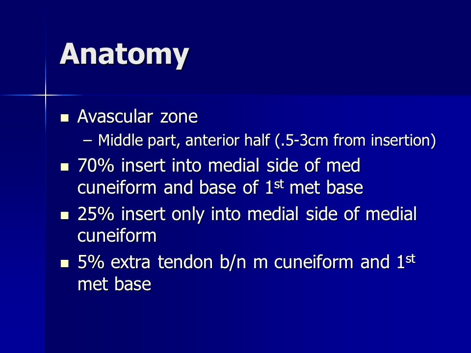 Anatomy Avascular zone
