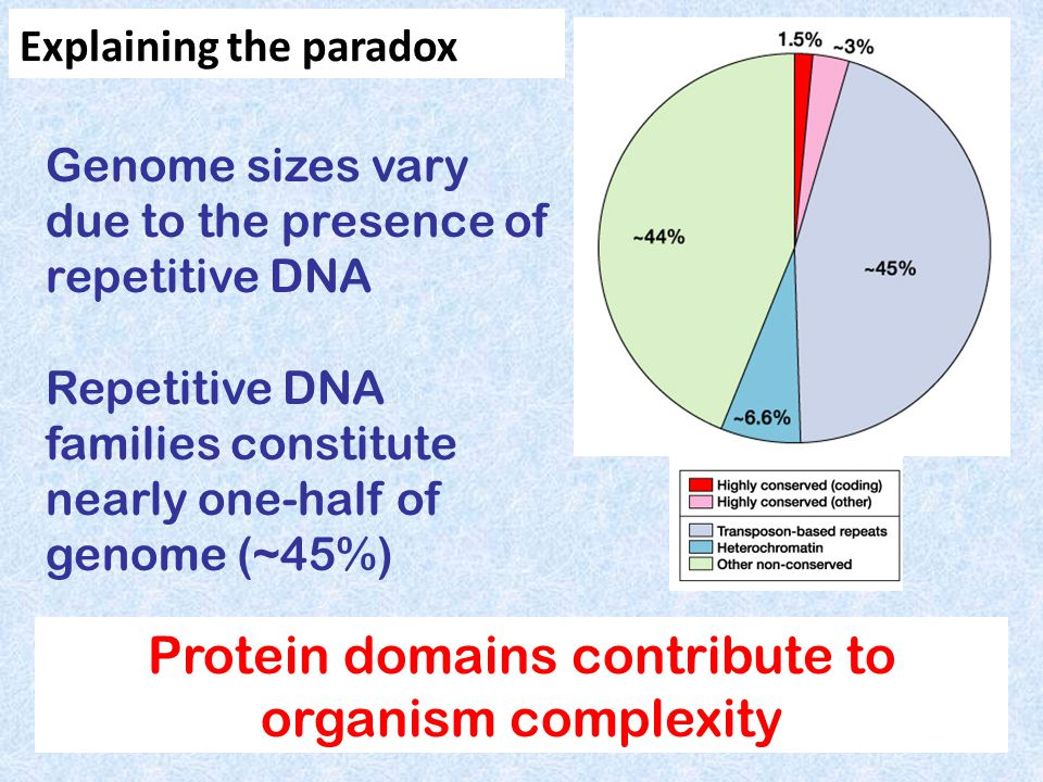 Protein domains contribute to organism complexity