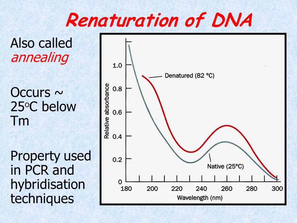 Renaturation of DNA Also called annealing Occurs ~ 25oC below Tm