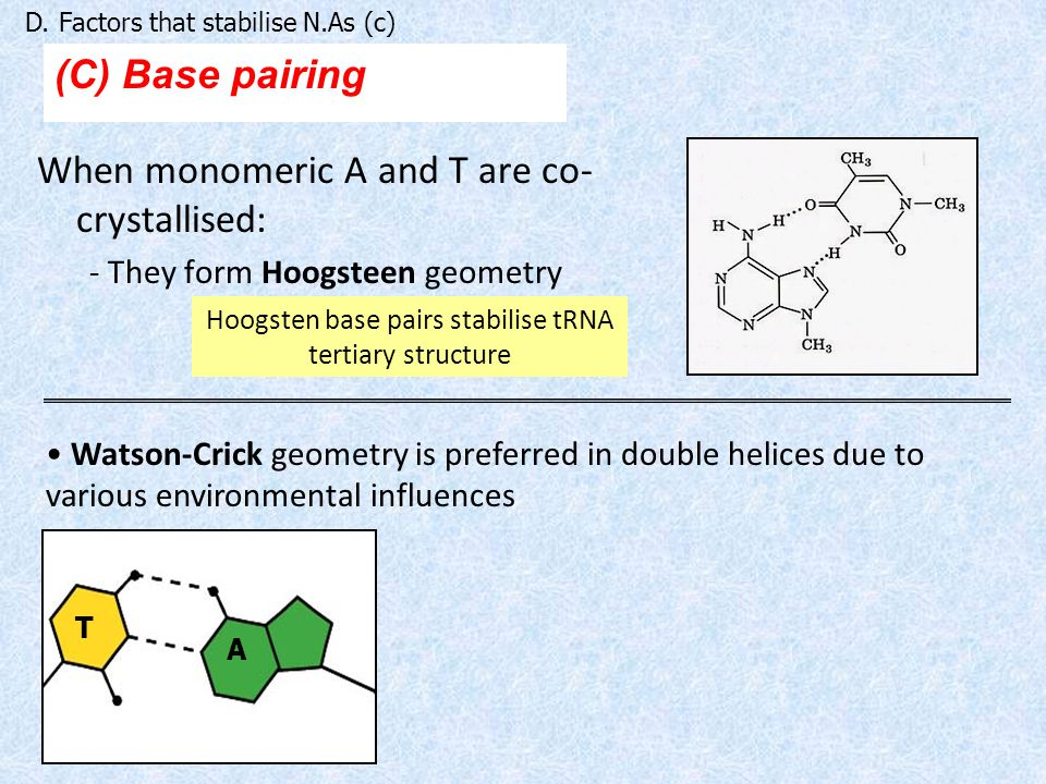 Hoogsten base pairs stabilise tRNA tertiary structure
