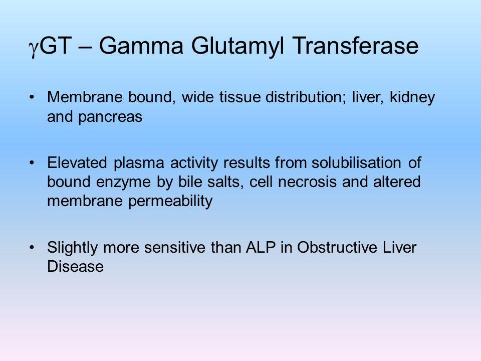 GT – Gamma Glutamyl Transferase