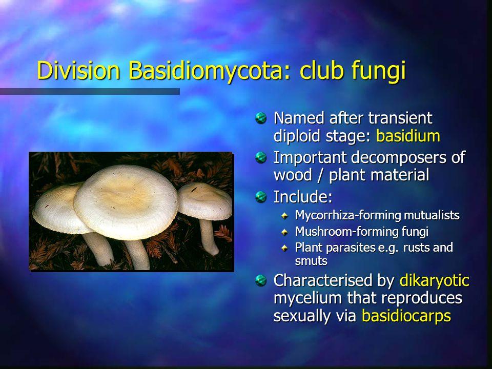 Division Basidiomycota: club fungi