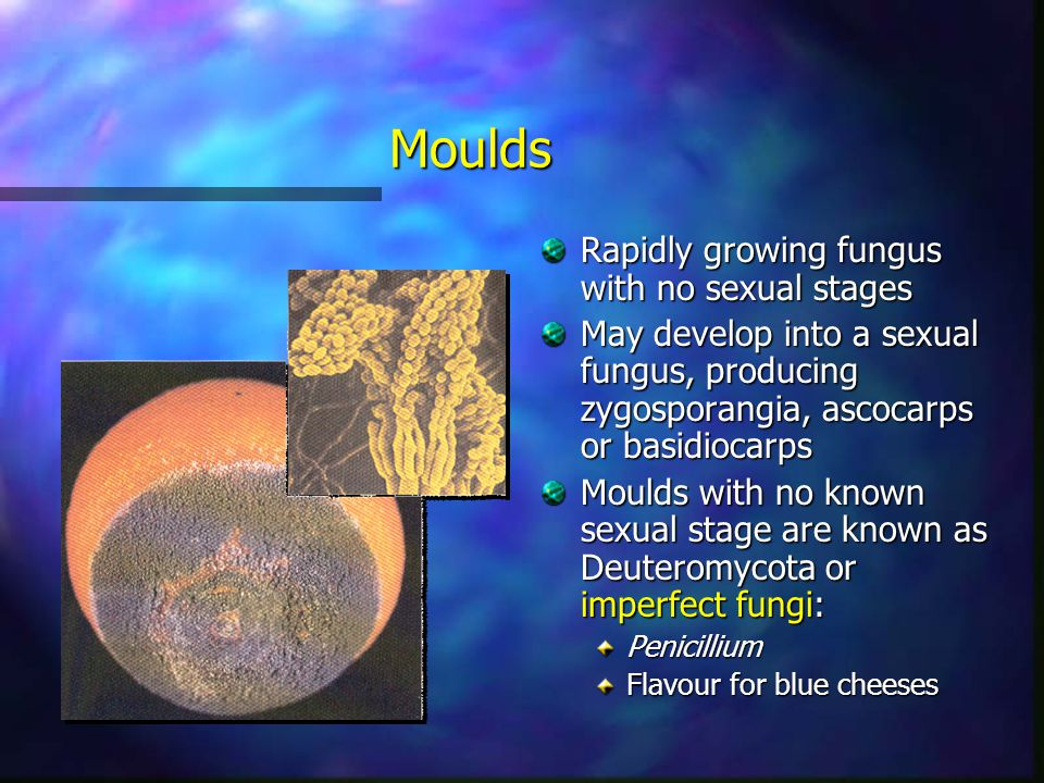 Moulds Rapidly growing fungus with no sexual stages