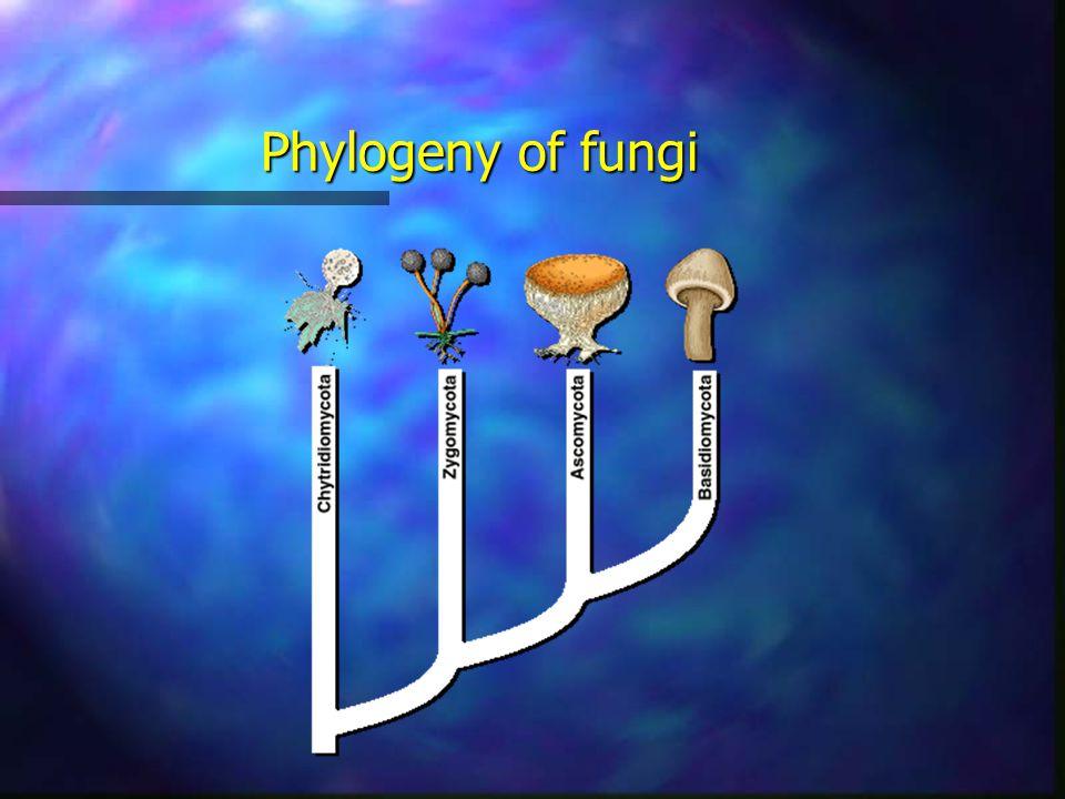 Phylogeny of fungi