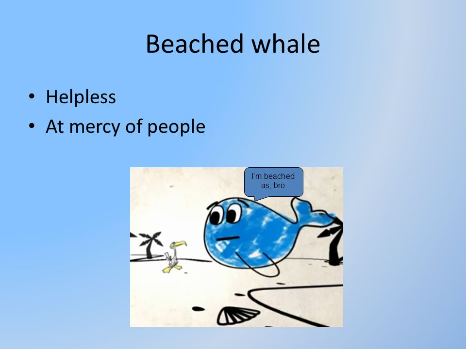 Beached whale Helpless At mercy of people I'm beached as, bro