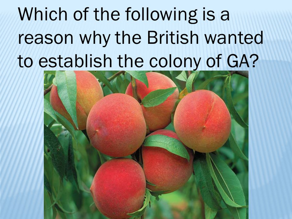 Which of the following is a reason why the British wanted to establish the colony of GA