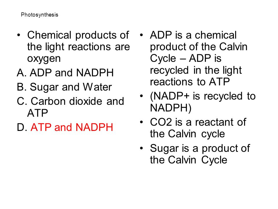Chemical products of the light reactions are oxygen