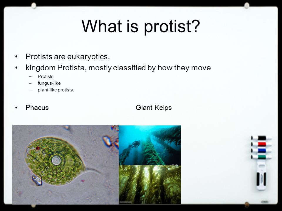 What is protist Protists are eukaryotics.
