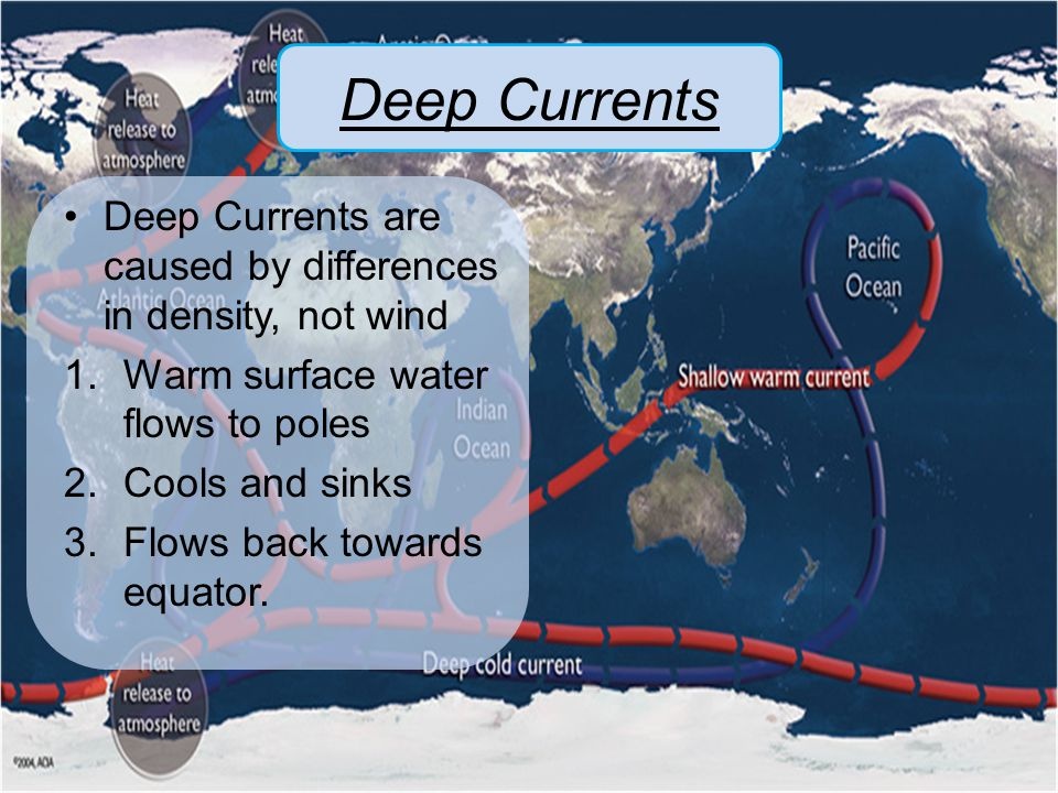 Deep Currents Deep Currents are caused by differences in density, not wind. Warm surface water flows to poles.