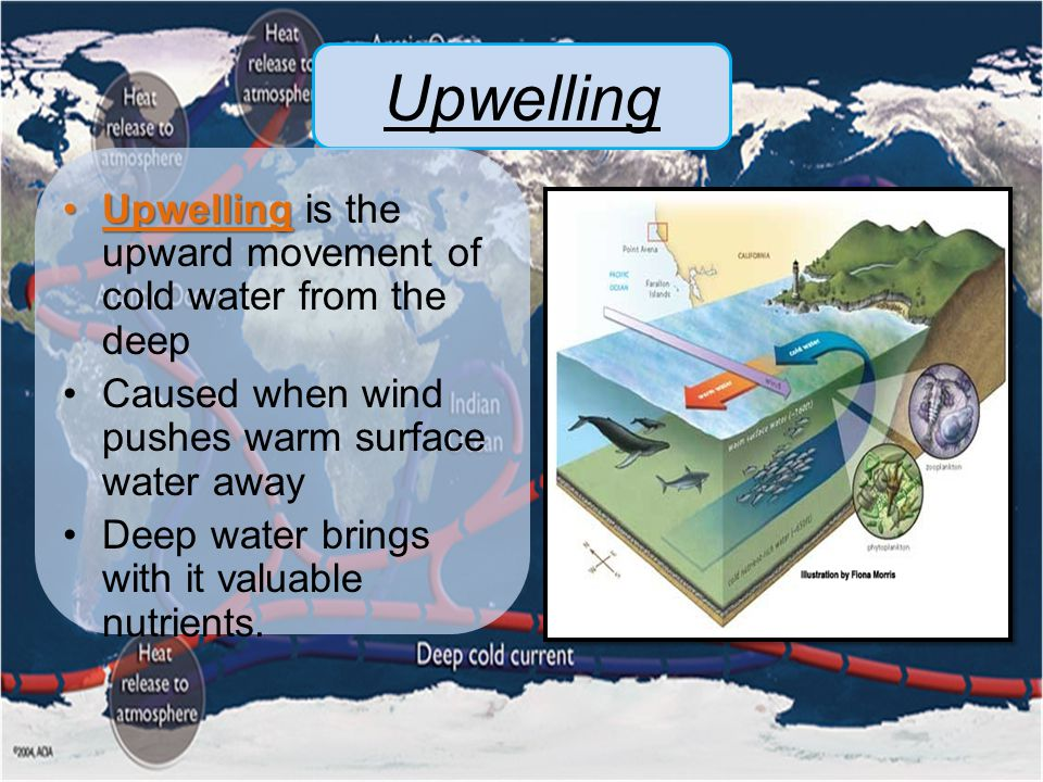 Upwelling Upwelling is the upward movement of cold water from the deep