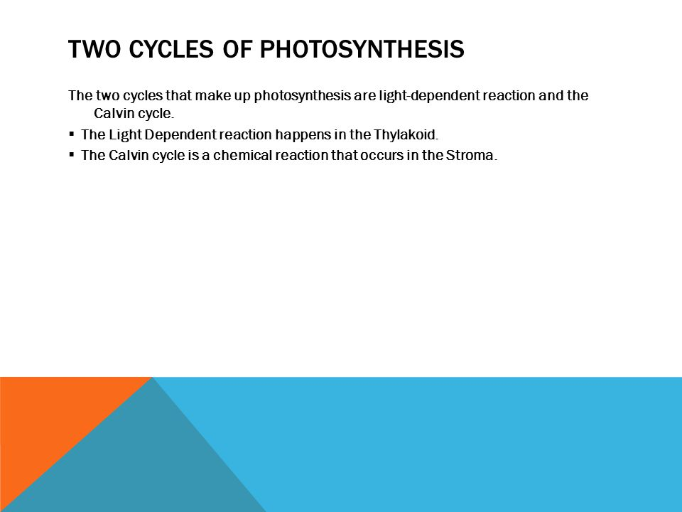 Two Cycles of photosynthesis