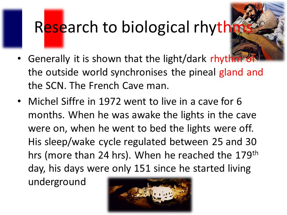 Research to biological rhythms