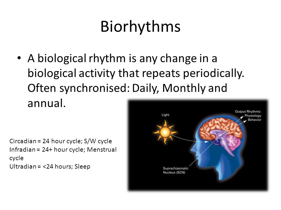 Biorhythms A biological rhythm is any change in a biological activity that repeats periodically. Often synchronised: Daily, Monthly and annual.