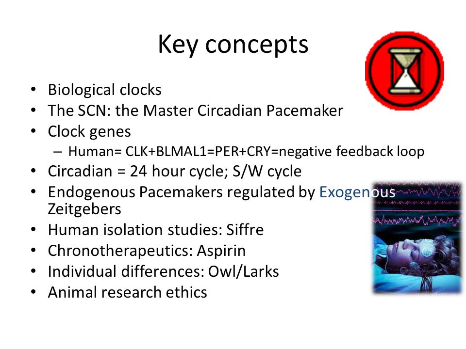 Key concepts Biological clocks The SCN: the Master Circadian Pacemaker