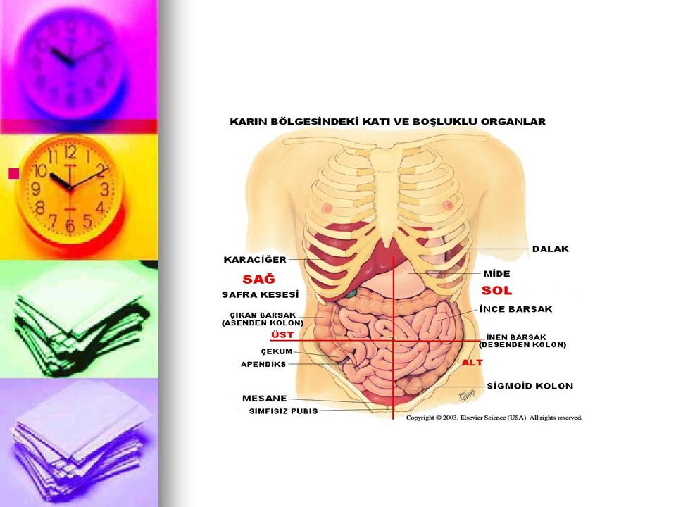 Karın boşluğunun (abdominal kavitenin)