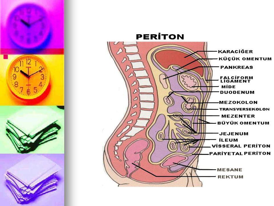 PERİTON Karın boşluğunu çevreler · Çift katlıdır : Visseral periton