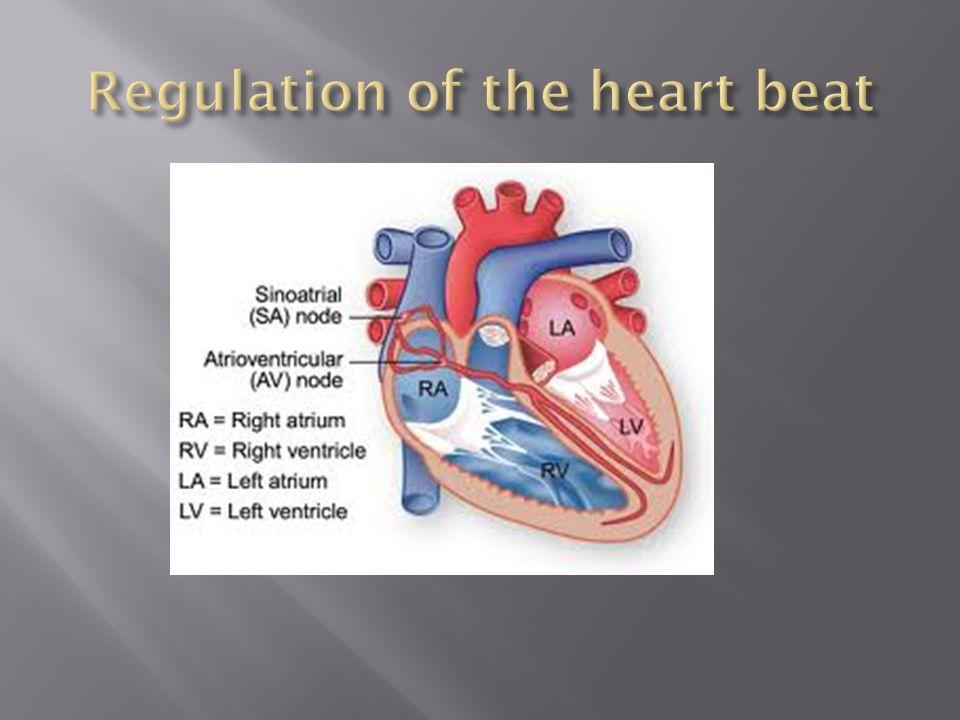 Regulation of the heart beat