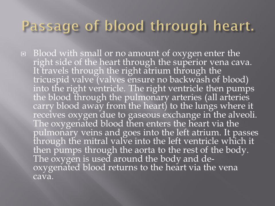 Passage of blood through heart.