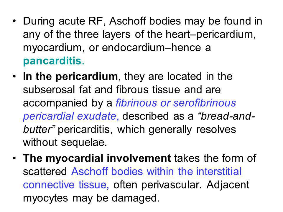 During acute RF, Aschoff bodies may be found in any of the three layers of the heart–pericardium, myocardium, or endocardium–hence a pancarditis.