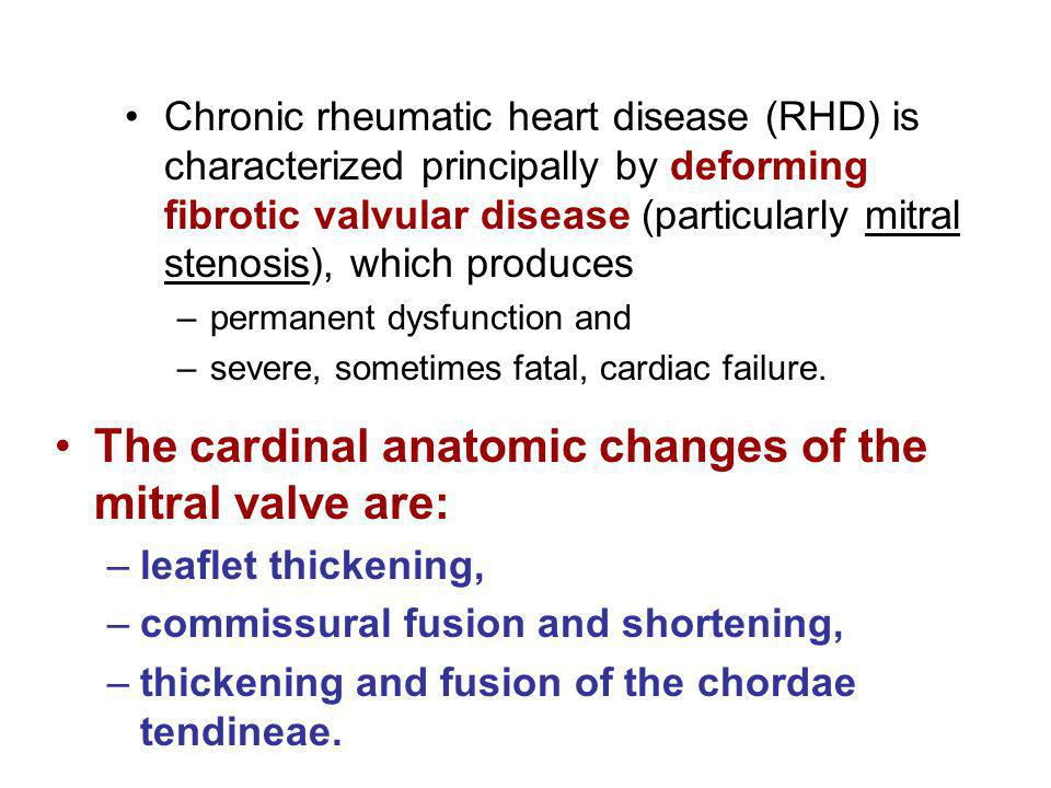 The cardinal anatomic changes of the mitral valve are:
