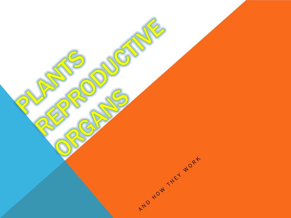 Plants reproductive ORGANS