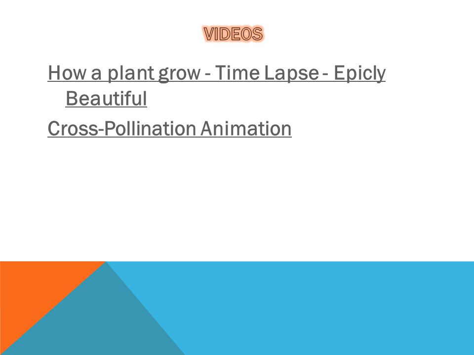 Videos How a plant grow - Time Lapse - Epicly Beautiful Cross-Pollination Animation