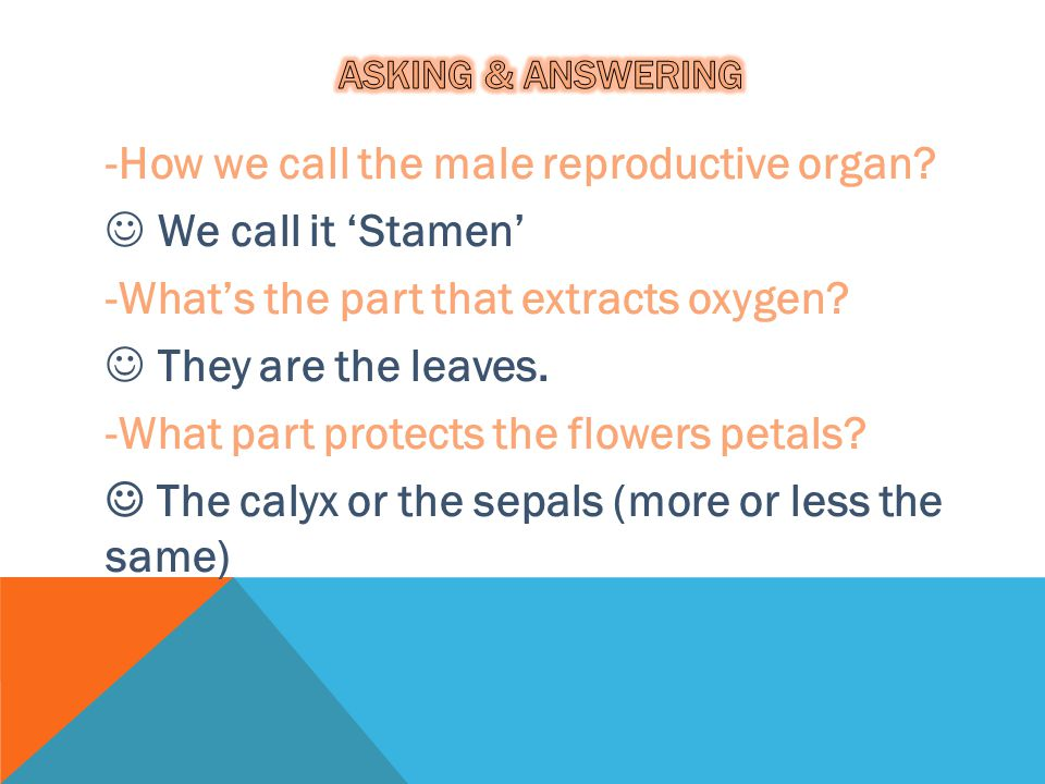 -How we call the male reproductive organ We call it 'Stamen'