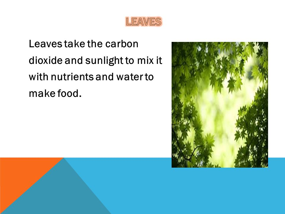 leaves Leaves take the carbon dioxide and sunlight to mix it with nutrients and water to make food.