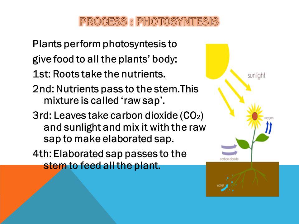 ProCess : photosyntesis