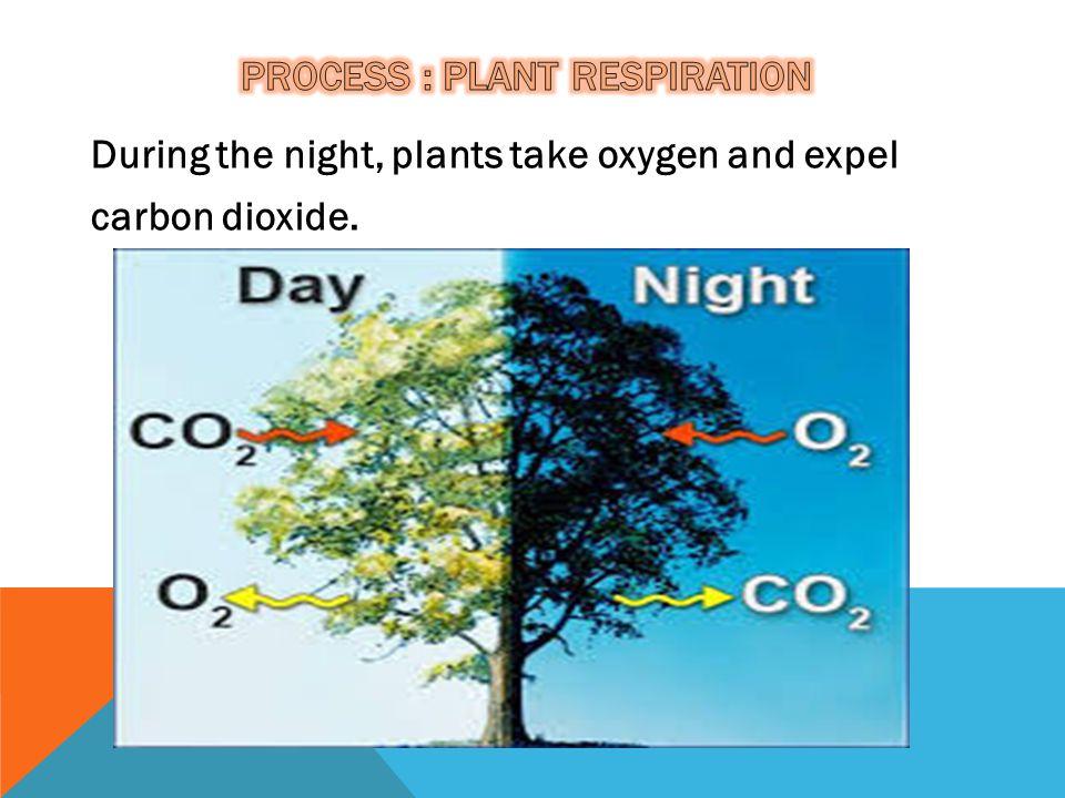 Process : Plant RESPIRATION
