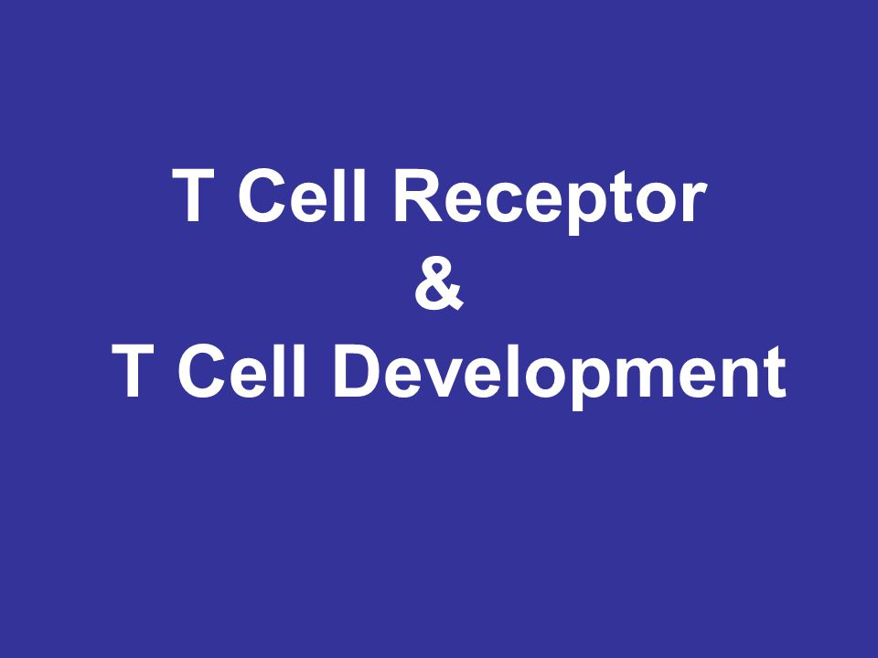 T Cell Receptor & T Cell Development