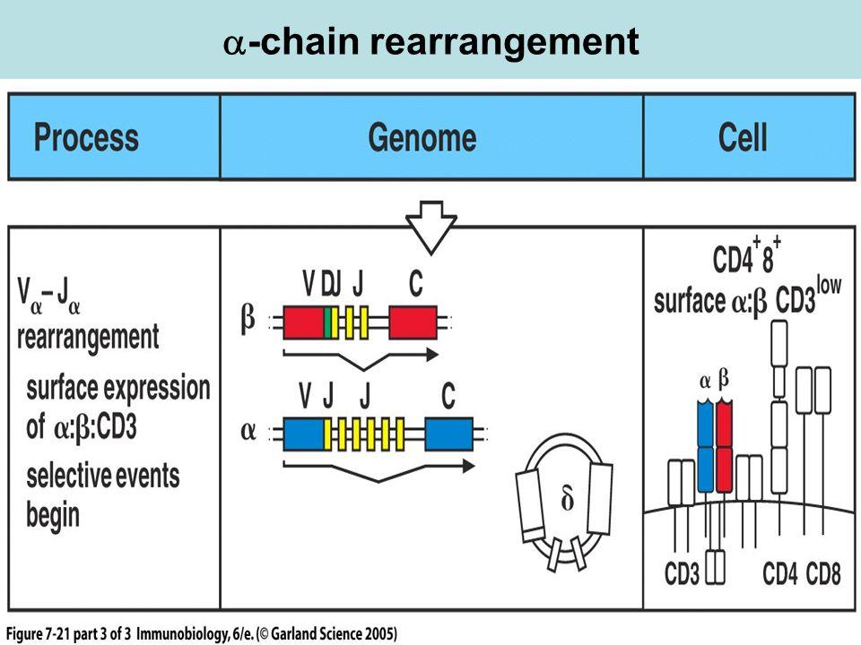 -chain rearrangement