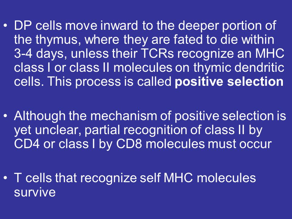 DP cells move inward to the deeper portion of the thymus, where they are fated to die within 3-4 days, unless their TCRs recognize an MHC class I or class II molecules on thymic dendritic cells. This process is called positive selection