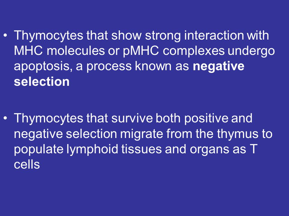 Thymocytes that show strong interaction with MHC molecules or pMHC complexes undergo apoptosis, a process known as negative selection