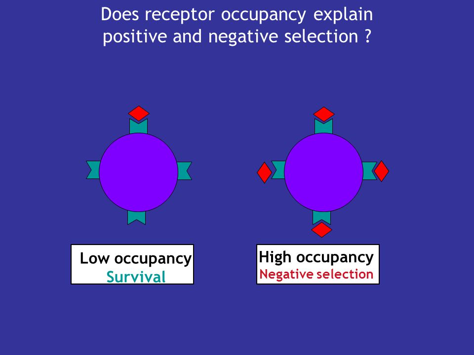 Does receptor occupancy explain positive and negative selection