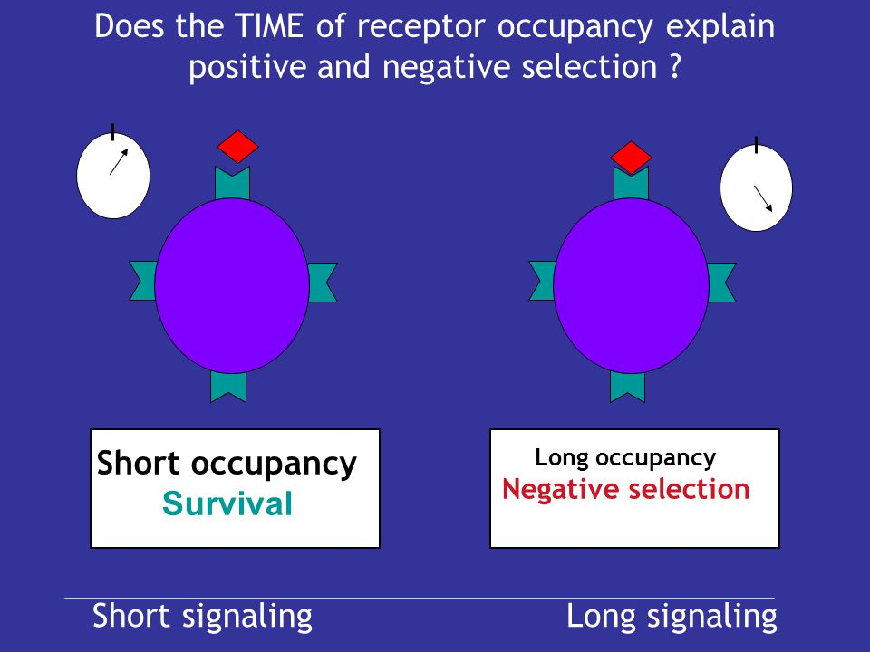 Does the TIME of receptor occupancy explain