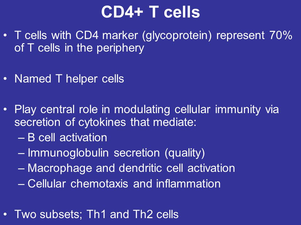 CD4+ T cells T cells with CD4 marker (glycoprotein) represent 70% of T cells in the periphery. Named T helper cells.