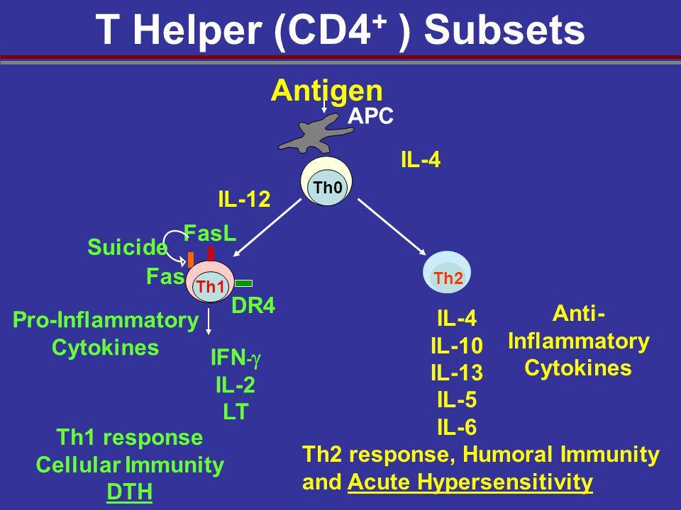 T Helper (CD4+ ) Subsets Antigen APC IL-4 IL-12 FasL Suicide Fas DR4