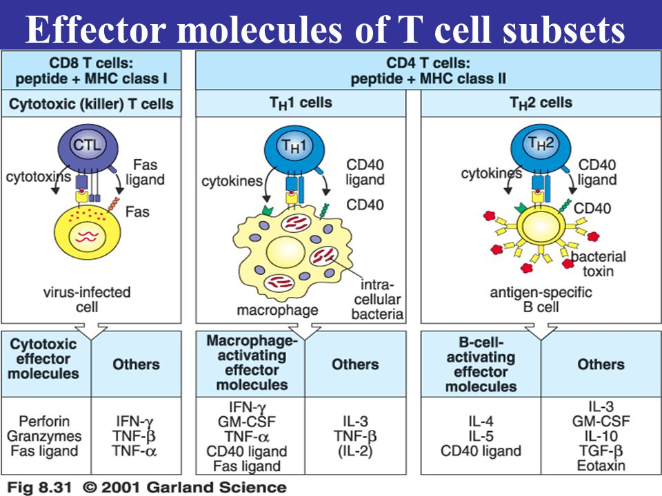 Effector molecules of T cell subsets
