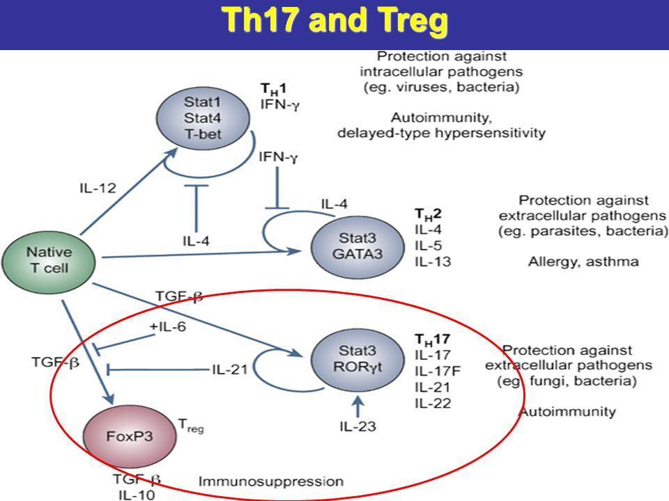 Th17 and Treg