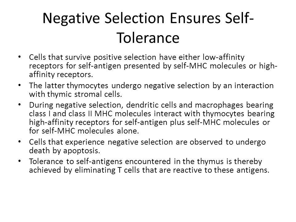 Negative Selection Ensures Self-Tolerance
