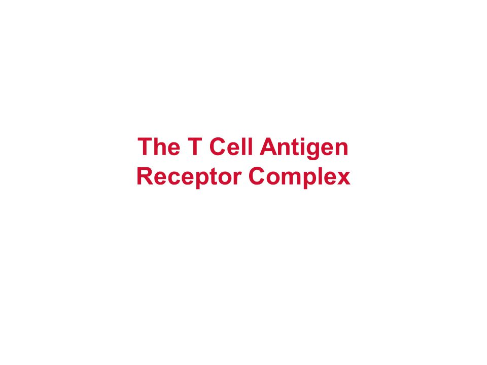 The T Cell Antigen Receptor Complex