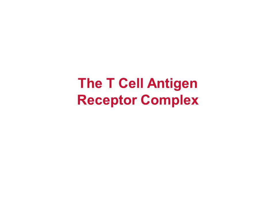 The T Cell Antigen Receptor Complex