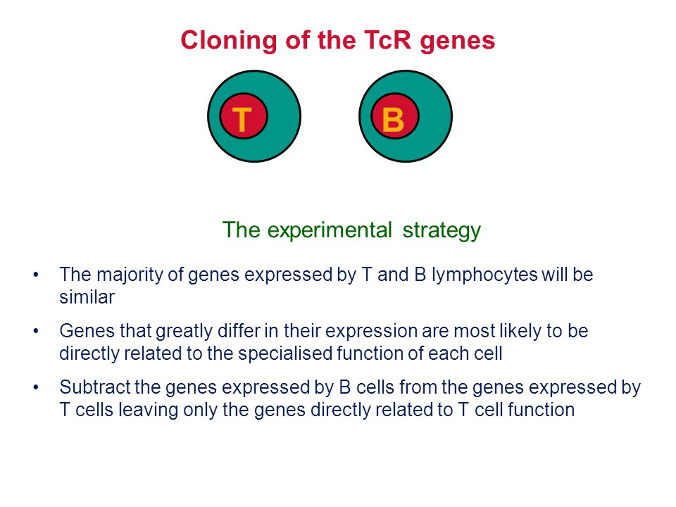 Cloning of the TcR genes