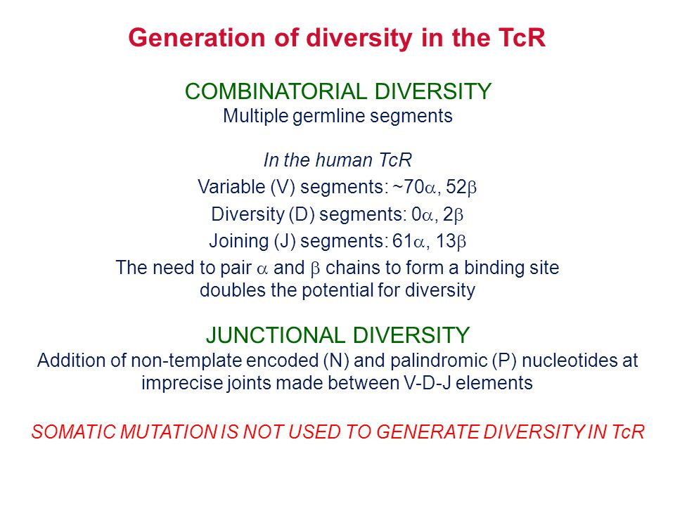 Generation of diversity in the TcR